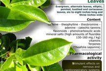 General / General information & Health Benefits Tips. / by Wholesale Garden Supply Store