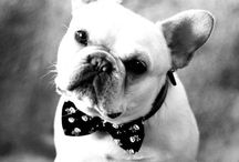 Dapper Dogs / Celebrating the finer dogs in life. www.scotchandhound.com