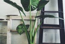 växtverk