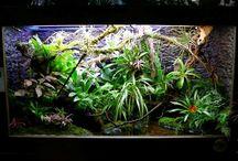 Aquariumscapes