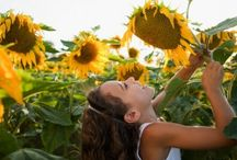 Sunflower Heaven!