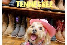 Nashville Dog Lovers