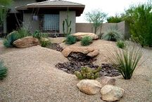 Front yard in Phoenix / Because making desert landscape pretty is just plain hard to do, but better than rocks. / by Sandi Sienkiewicz