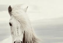 White white white ★