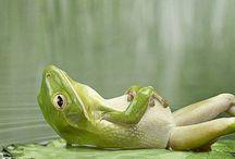 Κοιμάσαι βάτραχακομου.
