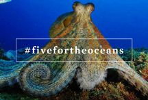#fivefortheoceans / by Oceana