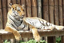 MazakaLand / Kayseri, Harikalar Diyarı, Hayvanat Bahçesi ZOO