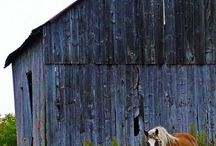 Old Barns .......
