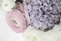 Lavendar, French Blue Mountain wedding / A romantic and lush purple, french blue and white mountain wedding.