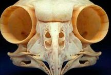 ANIMAL anatomy / Horses,dogs,birds,all wildlife animals