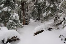Snowy Sceneries