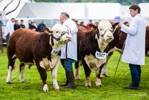 Shropshire County Show / One of the oldest surviving agricultural shows in the county
