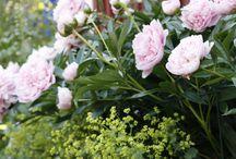 Blommor och Rabatter