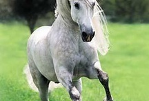 Horses / Horses!