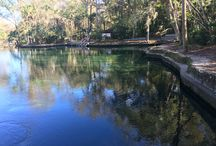 Blue Spring, Wekiva Springs--The Natural Beauty of Central Florida / This board recommends two separate $6 side trips from Orlando, Florida, to view the natural beauty of the state