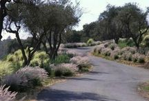 Driveways / Inspiration and ideas for designing your own driveway. For photos, videos and pro tips, visit http://www.landscapingnetwork.com/driveways/
