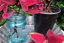 yard/garden tips / by Candice Aguilar