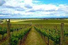 Oregon Originals: Wine in Willamette