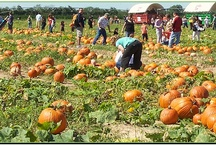 Pumpkin Time! / Many Texas Christmas tree farms host pumpkin festivals in the fall.  Go to TexasChristmasTrees.com to find a farm near you.