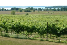 Chardonnay / Our vineyards, wines, and vines.  Everything entirely Bowers Harbor Vineyards Chardonnay.