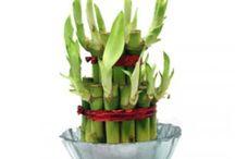 Send Plant to Noida