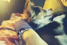 I love My dog♡♡♡