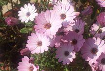 Fiori / Una raccolta di fiori... colori, freschezza, natura, luce...