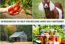Steps to Self Sufficiency