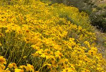 Field of Flowers n Meadows / by Madeleine