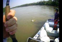 pesca no pantanal / A Pousada Barra do Aricá - está localizada as margens do rio Cuiabá no município de Santo Antônio de Leverger- MT há 01 hora de Cuiabá - Oferece o melhor da pesca e do Pantanal com todo conforto que você merece.