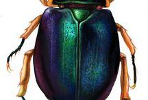 bugs &