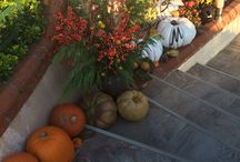 Halloween / Home decoration and party