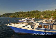 Dabirahe Resort Diving | Maka-Maka Divers / Dive with us: Maka-Maka Divers @ Dabirahe Resort. Discover Marvellous underwater macro lives.