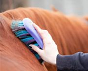HORSE GROOMING & OTHER