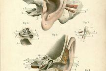 Ear Maps