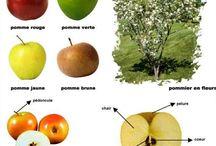 Fruit / Preschool education