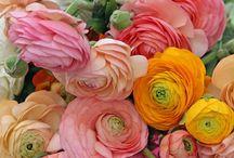 Flower power / Nydelige blomster, favoritter