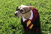 Pet Costumes for Halloween / Get some Halloween costume ideas for your furry pet friends.