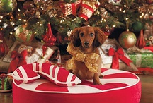 Holiday Pet Parade / Furry friends enjoying the holidays. / by Balsam Hill Christmas Tree Co.