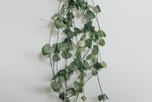 hang / Hanging plants, wall holders & shelves.