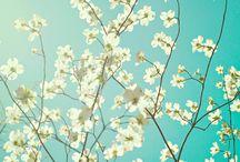 Photos - Spring