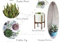 project indoor greenery