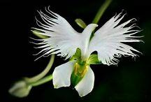 fantastical flora