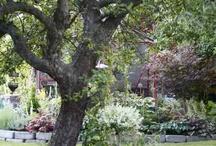 Trädgårdsplanteringar