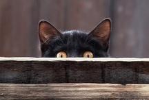 Cats, Kats, and more Kitty-Cats! / by Tana Corporon