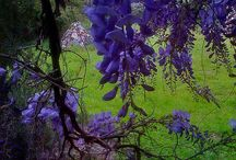 Landscapes / Nature / by Dawn Ruminski