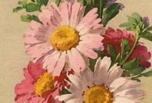cp flori victorian