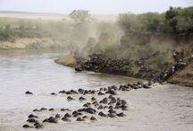 Africa4Fun / Kenya Safaris, indigenous tribes of Africa, and more
