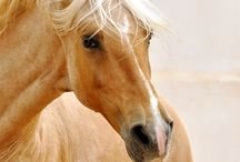 horses / by Terri Zink