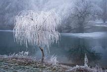 """Alberi... Trees... / """"Gli alberi sono santuari. Chi sa parlare con loro, chi sa ascoltarli, conosce la verità."""" (Hermann Hesse)"""